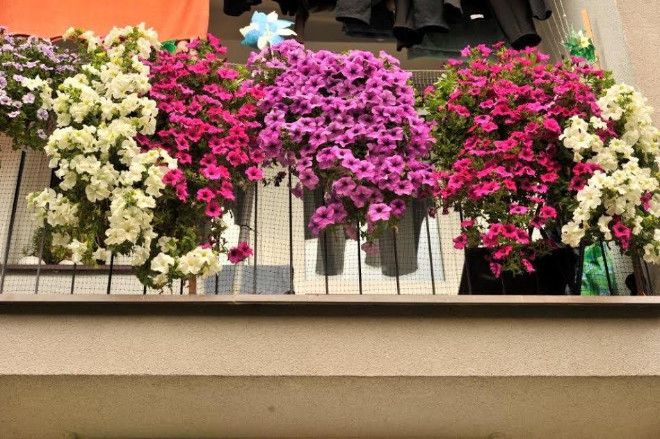 Znamy najładniejsze balkony mieszkańców należących do Spółdzielni Mieszkaniowej Górnik w Jaworznie