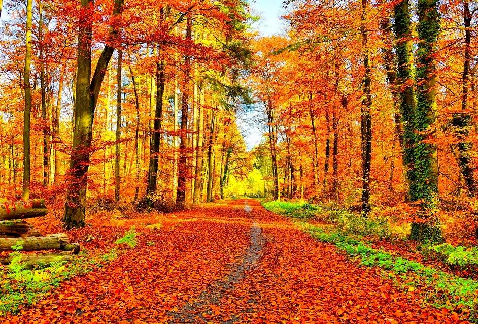 Pierwszy dzień jesieni – kalendarzowy, astronomiczny i metereologiczny początek jesieni   Jaworzno - Portal Społecznościowy - jaw.pl   Jaworzno